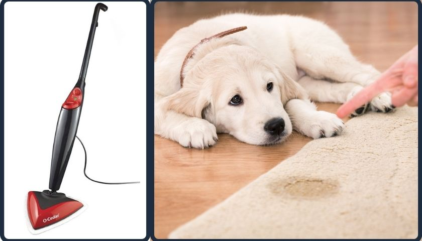 Are Steam Mops Good for Pet Urine