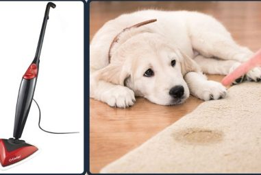 Are Steam Mops Good for Pet Urine | Here is the Solution