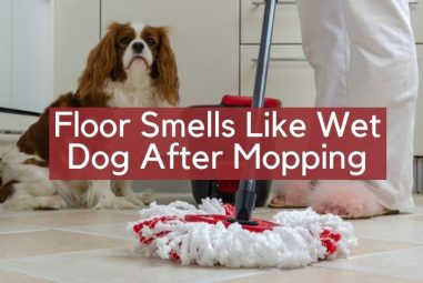 Floor Smells Like Wet Dog After Mopping | Why & How to Remove